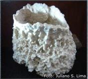 esponja1